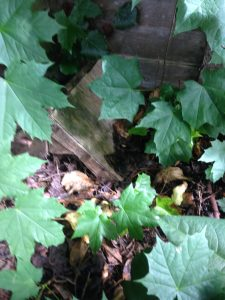 makeshift plywood hedgehog house