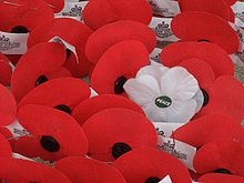 Armistice Day white poppy