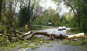 fallen tree across road