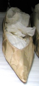evening slipper, Hereford collection