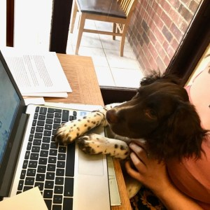 Dexter the spaniel learns to type