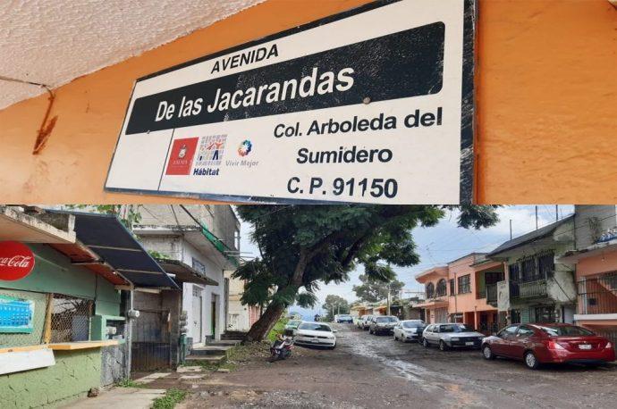 Las Jacarandas