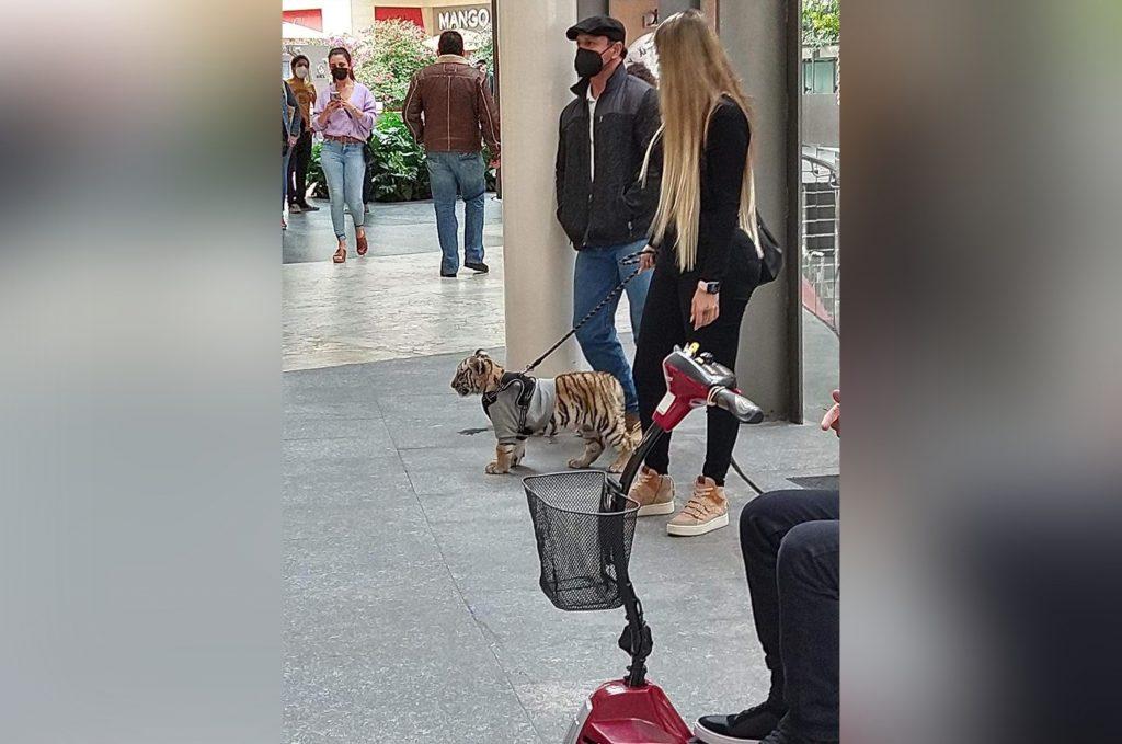 Mujer pasea un cachorro de tigre en Polanco, causando polémica