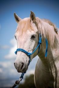 Portrait cheval blanc