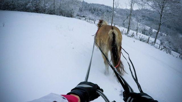 Ski joering cheval