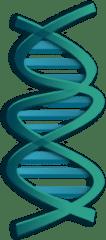building genetics