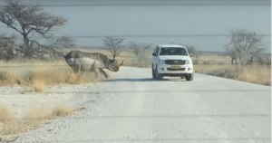 VIDEO: Road Rage African Style!