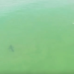 Can A Shark and A Surfer Coexist?