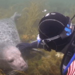 'Seal' It With A Kiss, Diver Scores A Date