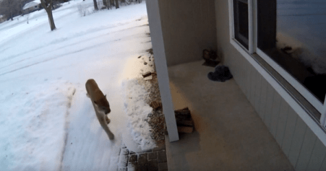 A Chilling Visitor Surprises Wisconsin Couple