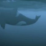 The Giant Whale In The Room- Proof That A Group In Society Has Lost Touch With Reality