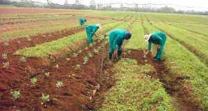 CBN, State Govt. Pledge Support For Cotton Farmers In Ekiti