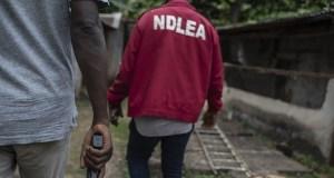 Public Health: NDLEA Arrests 15 Suspected Drug Dealers