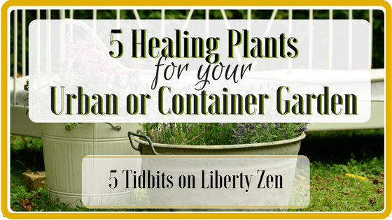 5 Healing Foods for Your Urban or Container Garden