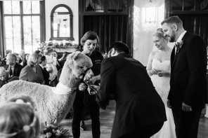 Larmertree gardens wedding ceremony with Alpaca