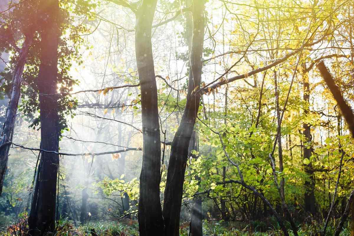 Smoke in tha autumn forest