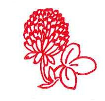 red clover logo, drawn image of a red clover