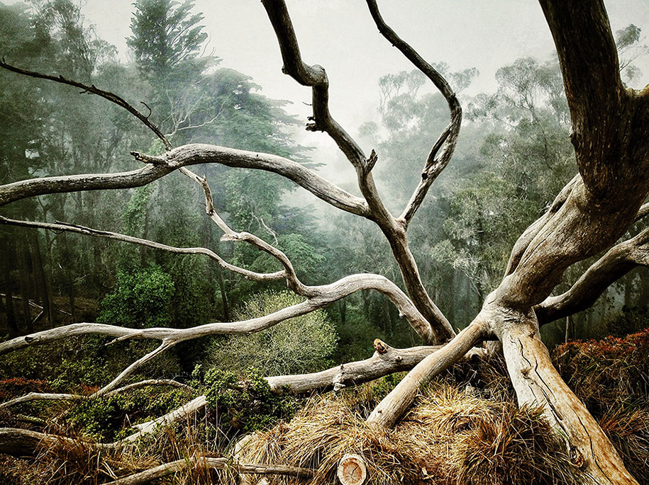 AARON PIKE, San Francisco, CA United States, 1st place – Trees