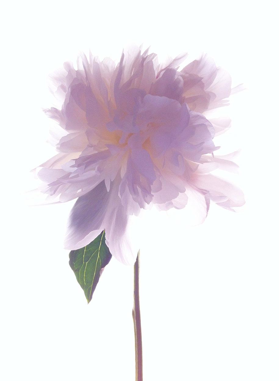 MONICA GANTER, Glenside, PA United States, 3rd Place – Flowers