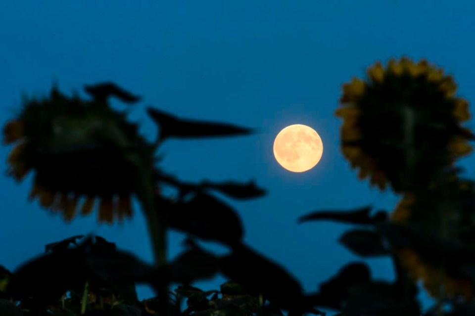 kék hold