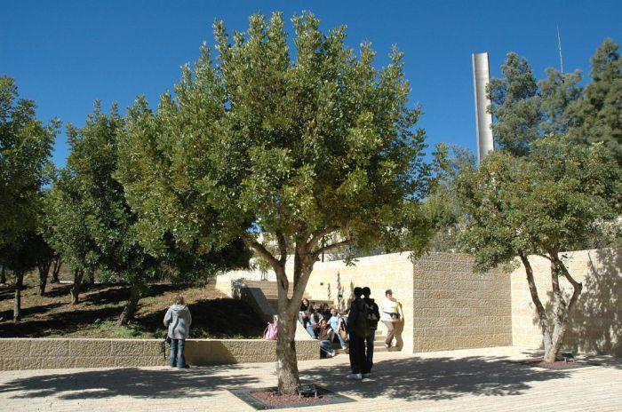 Irena fája Jeruzsálemben