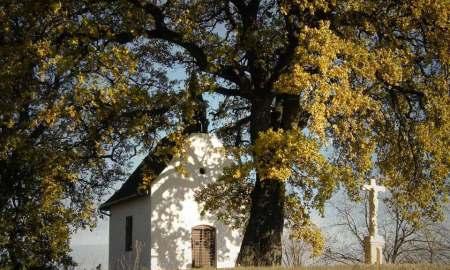 év fája