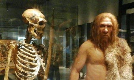 Neander-völgyi