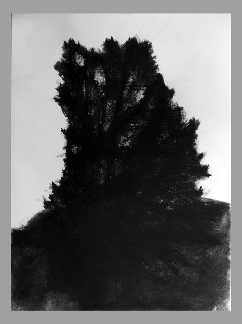 Sérült tölgy este, szén, papir, 41x29,7 cm, 2015