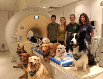 Elsőként bizonyítottuk a világon, hogy a kutyák agya az emberéhez hasonlóan dolgozza fel a beszédet