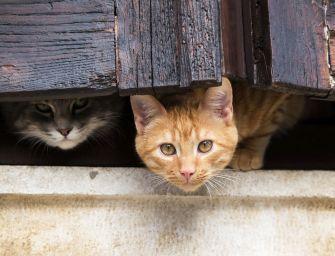 Szerinted emlékeznek rá a macskák, hogy miből ettek 15 perce?