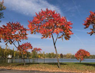 A nap fotója: Káprázatos színekben pompázik az ősz