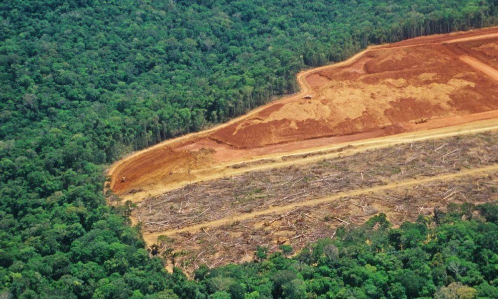 Fölfogtuk, mit csinálunk? – Csak tavaly 4,2 millió hektár őserdő veszett oda