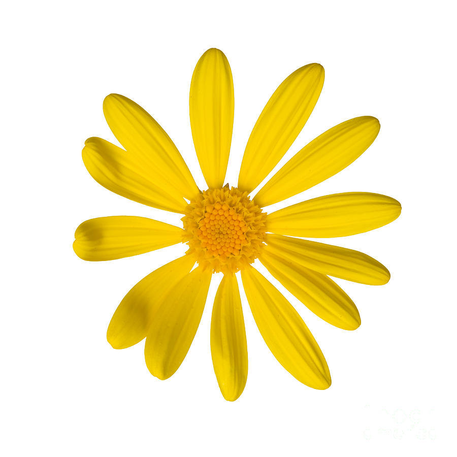Flower Logo Design In Coreldraw Kayaflower Co