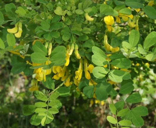 Bosquet de fleurs sauvages ... ça a certainement un nom scientifique mais ...