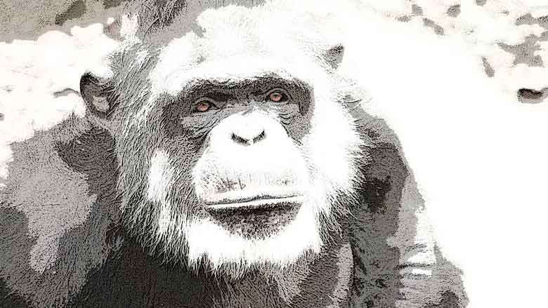 Charla con un viejo chimpancé,, sexta entrega de Qué día el de aquella noche