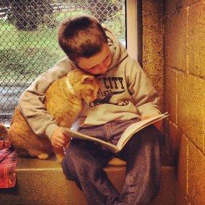 leggere libri ai gatti