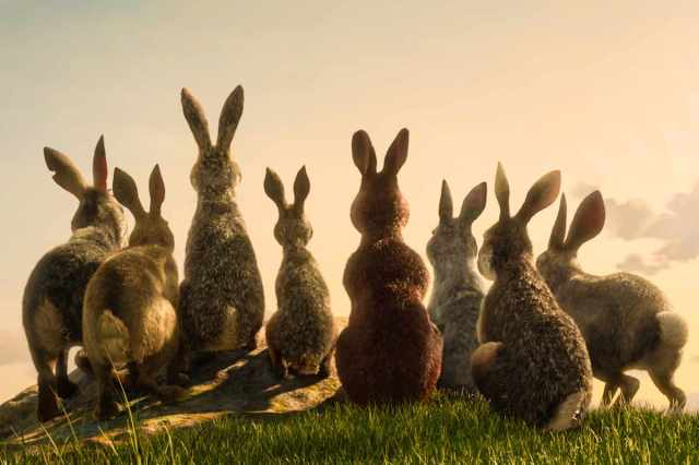 La miniserie BBC/Netflix de La collina dei conigli