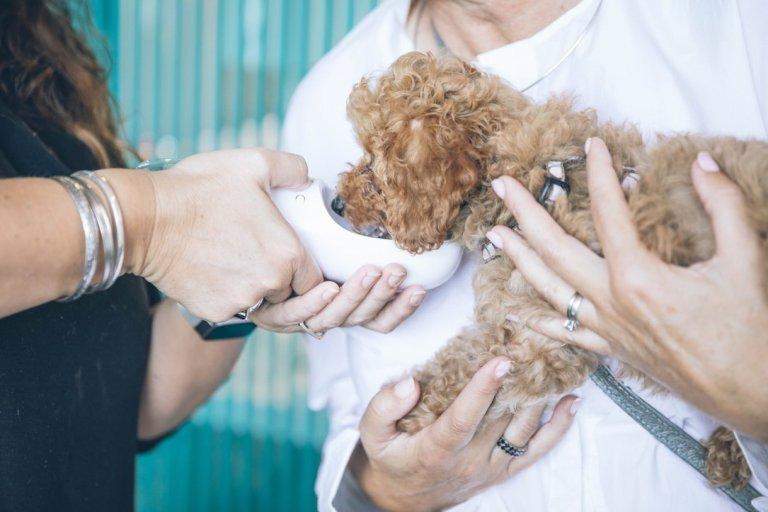 Veterinaria Psicologia Animal Perro