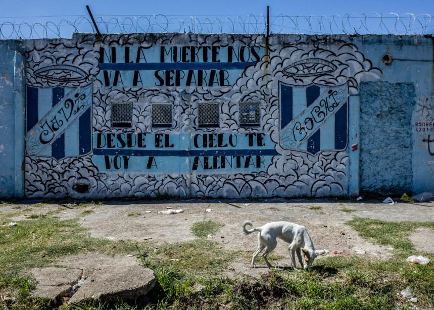 Los amores perros de la isla Maciel retratados por Karl Mancini