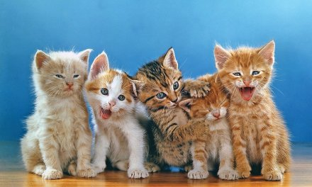 Walter Chandoha, el fotógrafo que retrató a noventa mil gatos