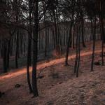 Maurizio Esposito, la destrucción del parque nacional del Vesubio y Nápoles este