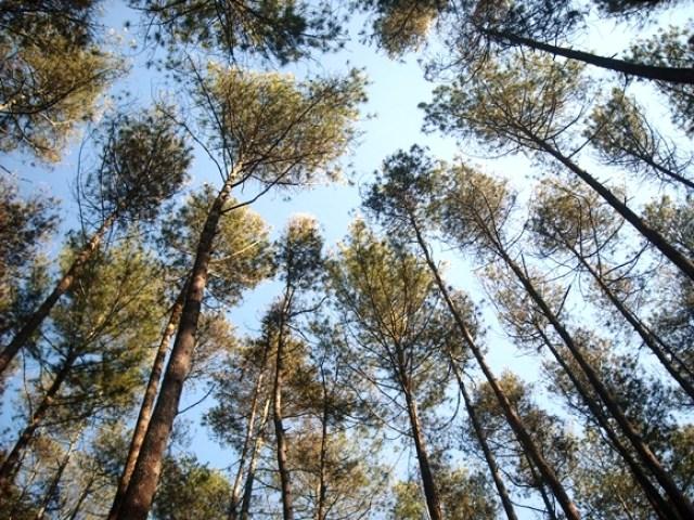 Berhenti sejenak, nikmati suasana hutan pinus yang segar dan menenangkan.