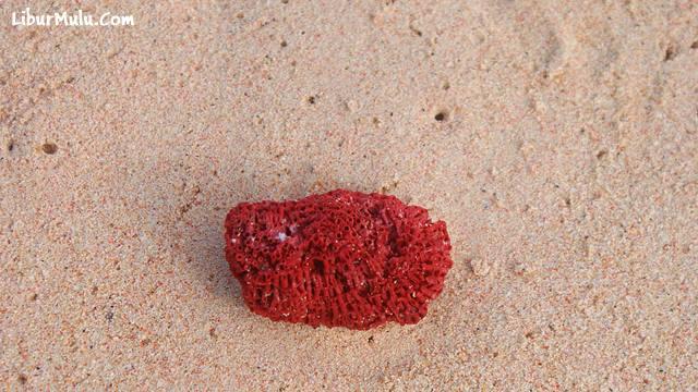 Pasir Pantai Pink Lombok timur.