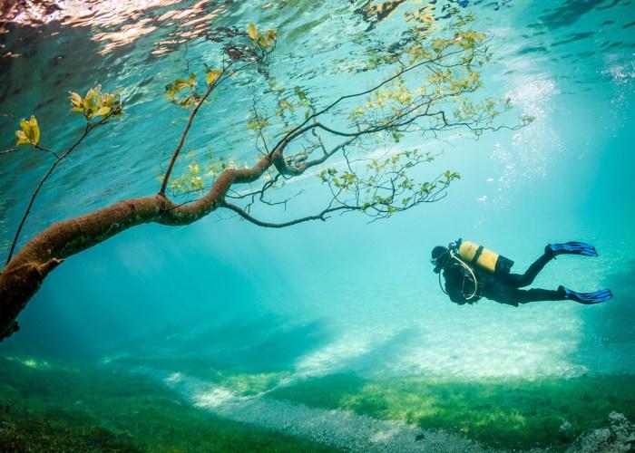 Meski terendam air, pohon tetap segar disini!
