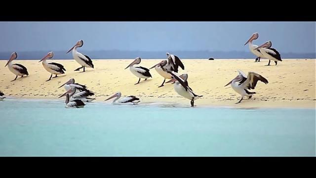 Fauna dari Maluku yang lucu.