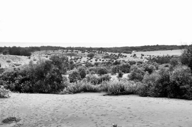 Gumuk Pasir Parangkusumo ini benar - benar mirip dengan Gurun Sahara.
