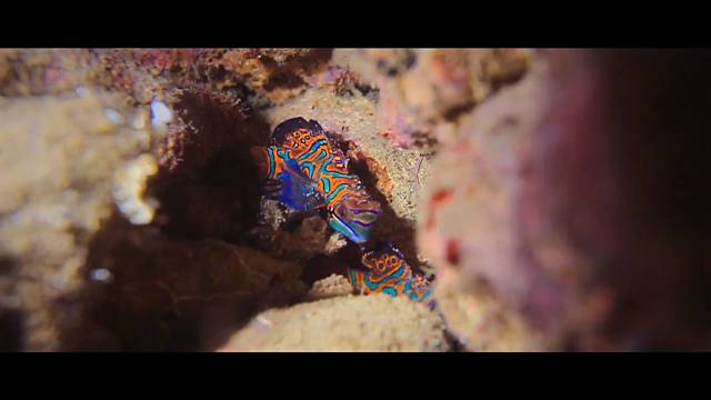 Ikan yang unik, fauna bawah laut Maluku.