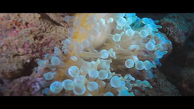 Kehidupan bawah laut Maluku juga memukau.