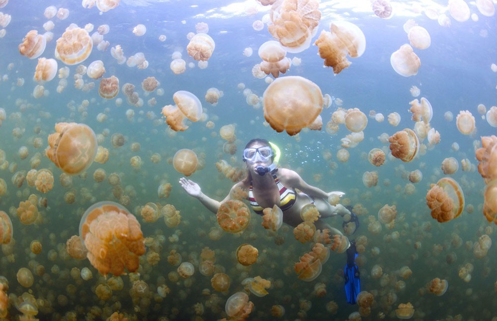 Pulau Kakaban Dengan Ubur - Ubur Yang Tidak Menyengat