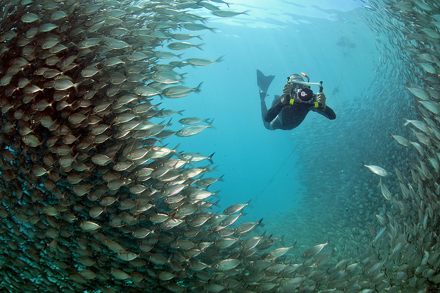 Raja Ampat is one of the best dive sites in Indonesia